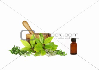 Culinery and Medicinal  Herbs