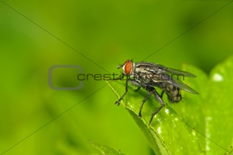 housefly and leaf in the parks