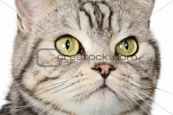 Closeup cat portrait