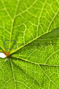 Green leaf texture