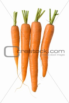 Fresh carrots on white