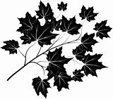 Vector illustration of maple branch