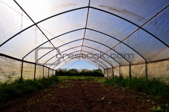 greenhouse at oranic farm