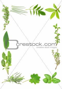 Culinary and Medicinal Herbs