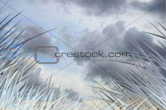 Gray grass