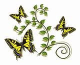 Butterflies and leaves