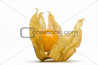 Cape Gooseberry fruit with husk