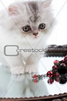 Kitten and mirror