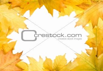 Autumn leaves for design