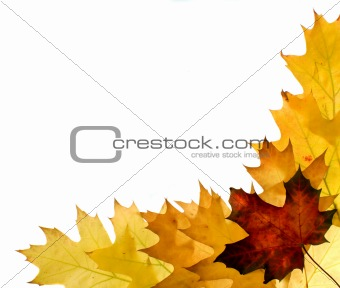 Autumn leaves for design