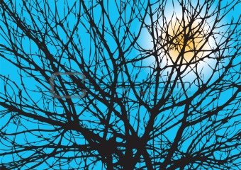 Tree Branches Silhouette With Sun On A Blue Sky