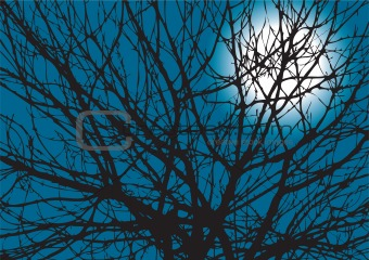 Tree Branches Silhouette With Moon At Back