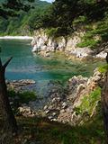 beautiful korean pine sea island