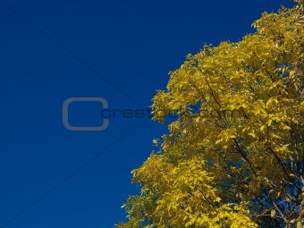 autumn landscape with blue sky and yellow tree