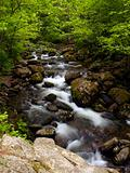 summer forest mountain stream