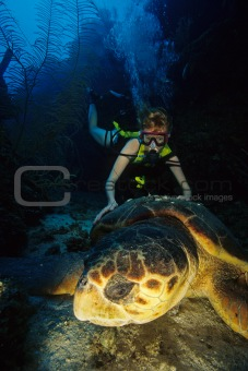 Turtle &amp; Diver