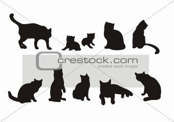 cat's silhouettes