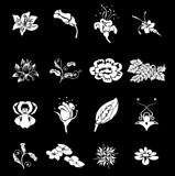 Floral Icon Set Series Design Elements