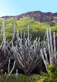 Cactus in Hawaii