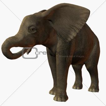 Baby Elephant Drink