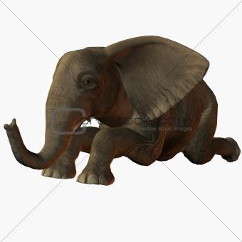 Baby Elephant Kneel