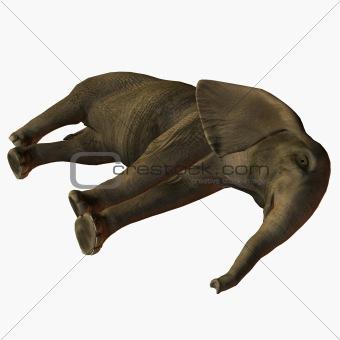 Baby Elephant Lay Down