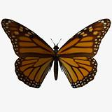 Butterfly-Monarch