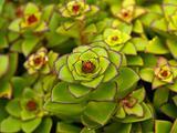 exotic flowering cactaceous grass plant