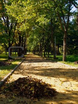 autumn park alley with yellow leaf pile