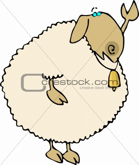 Waving Sheep