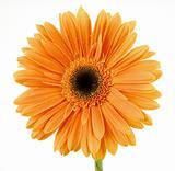 Orange Cantilever