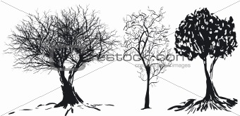 Tree silhouette