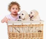 young child and  puppies in a basket