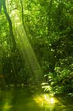 sunbeam in green forest
