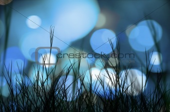 Lights and grass