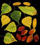 Set of autumn leaves