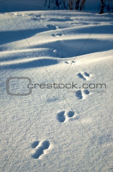 Animal Footprints-3