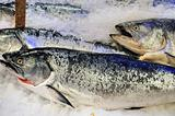 Frozen King salmon