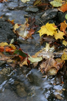 Autumn Stream Foliage