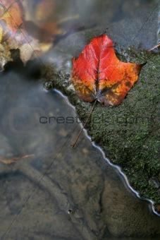 Bright Red Leaf Near a Stream