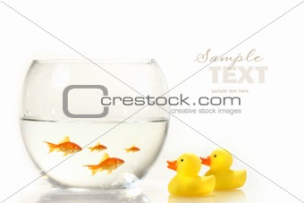 Bowl with goldfish and little rubber ducks