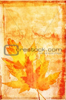 Autumn maple grunge
