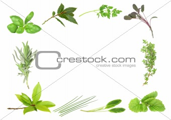 Herb Leaf Border