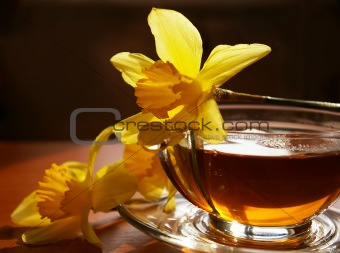 Black tea and flowers narcissuses