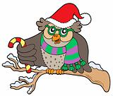 Owl in Christmas outfit