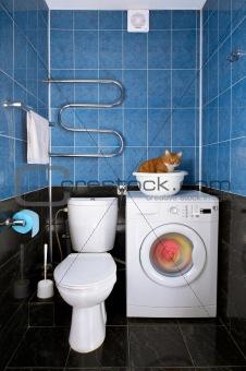 Kitten in a bathroom