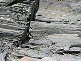 grey rock close up