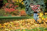 racking fall leaves