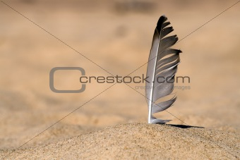 Seagull feather in beach