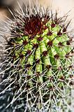 close up of cactus
